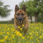 Na koronavirus zemřel první pes. Jsou domácí zvířata v ohrožení?
